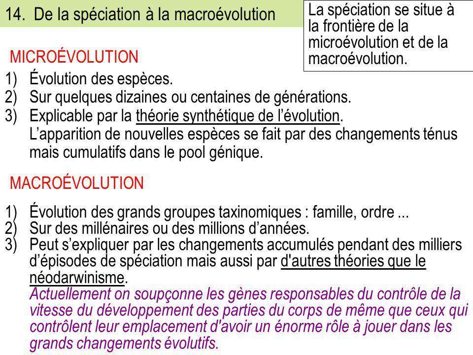 14. De la spéciation à la macroévolution