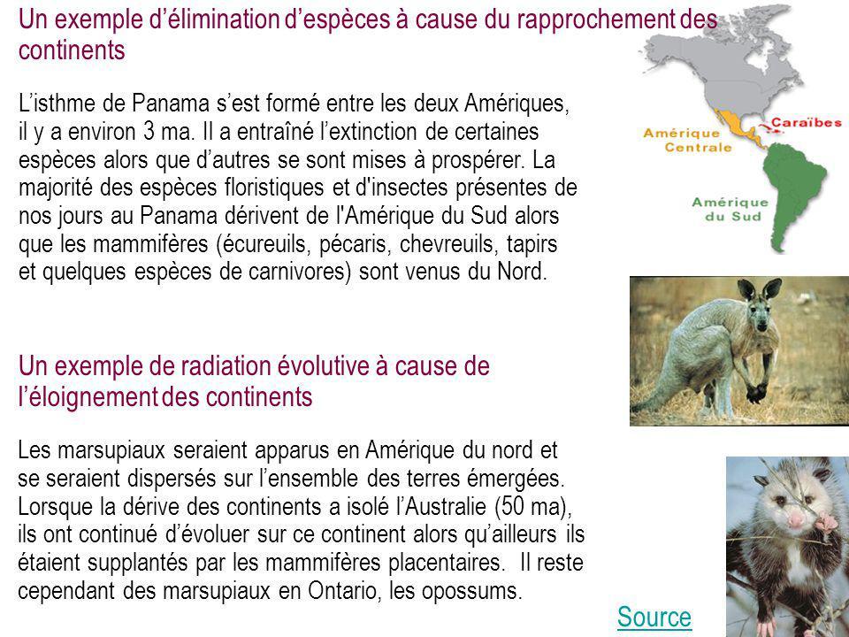 Un exemple d'élimination d'espèces à cause du rapprochement des continents