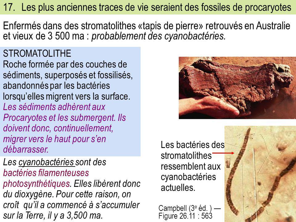 17. Les plus anciennes traces de vie seraient des fossiles de procaryotes