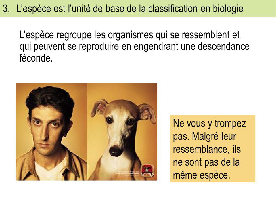 3. L'espèce est l unité de base de la classification en biologie