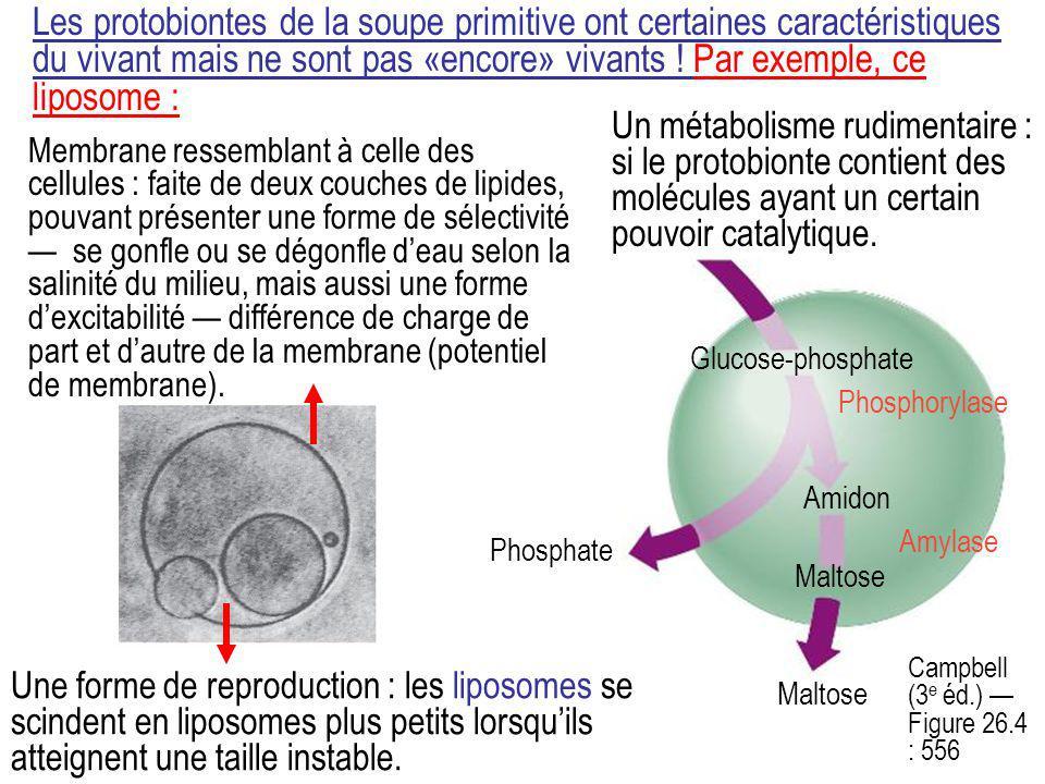 Les protobiontes de la soupe primitive ont certaines caractéristiques du vivant mais ne sont pas «encore» vivants ! Par exemple, ce liposome :
