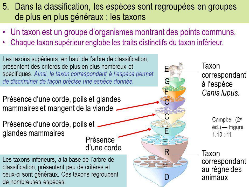 5. Dans la classification, les espèces sont regroupées en groupes de plus en plus généraux : les taxons