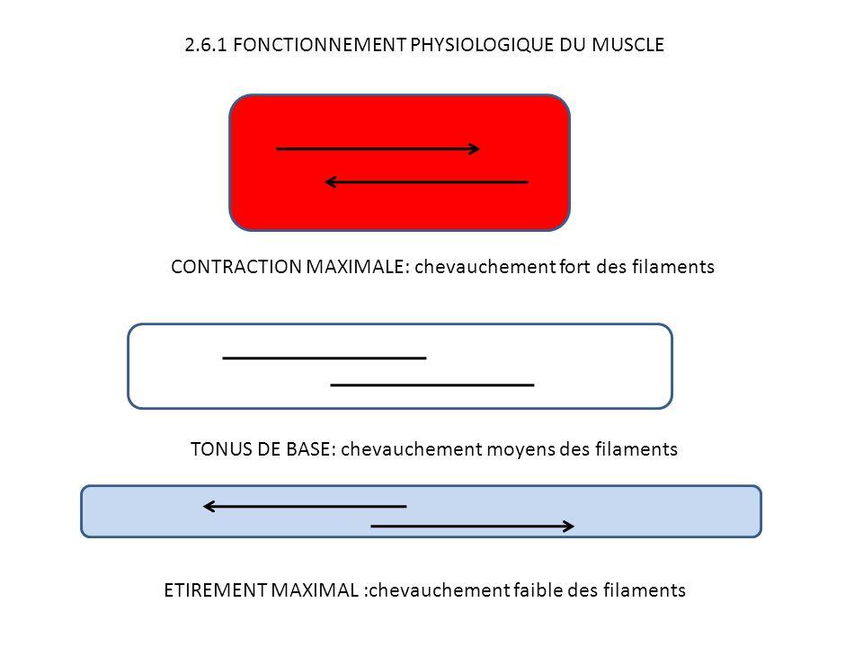 2.6.1 FONCTIONNEMENT PHYSIOLOGIQUE DU MUSCLE