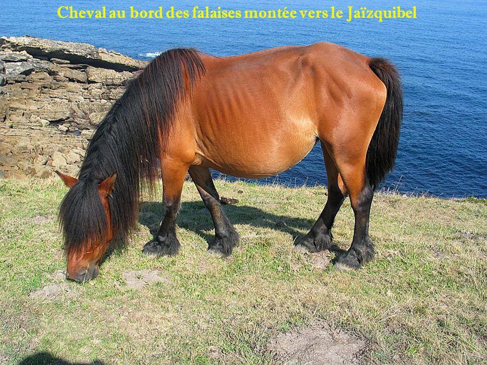Cheval au bord des falaises montée vers le Jaïzquibel