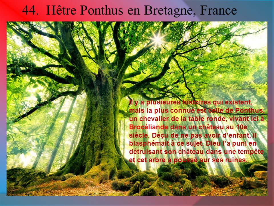 44. Hêtre Ponthus en Bretagne, France