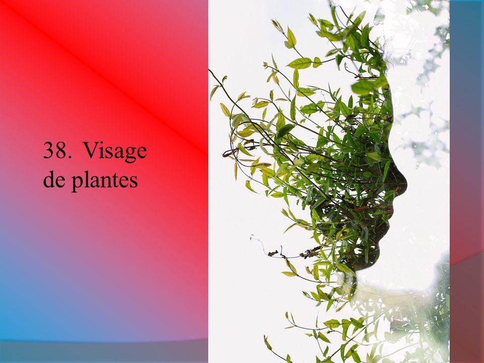 Visage de plantes