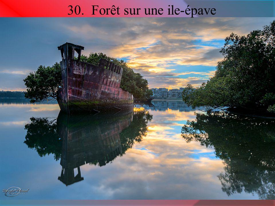 30. Forêt sur une ile-épave