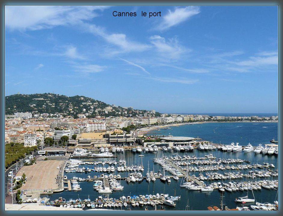 Cannes le port