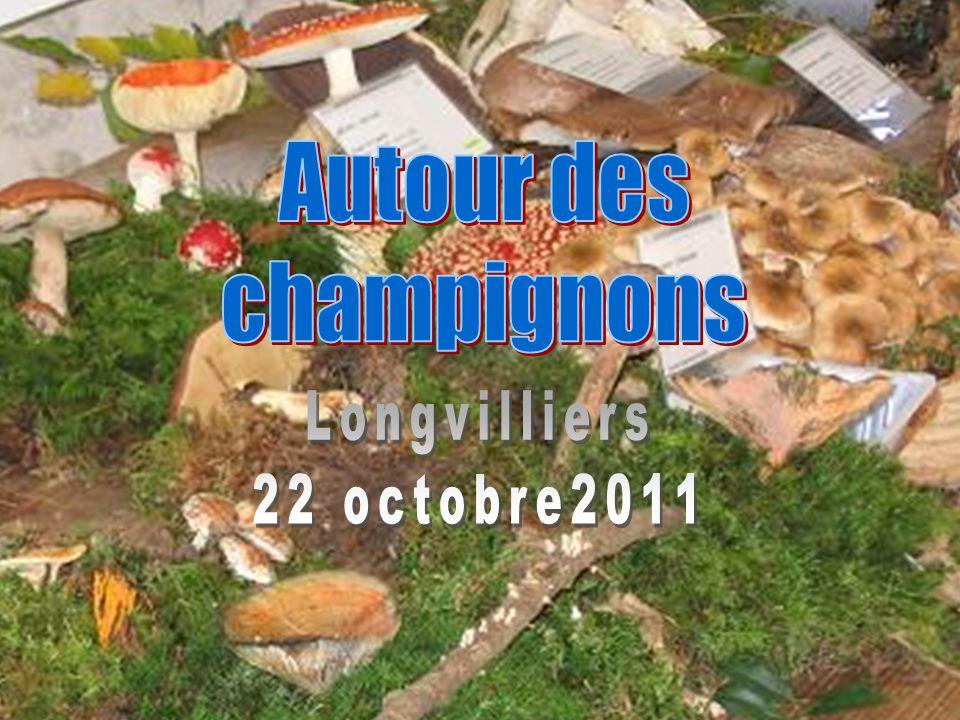 Autour des champignons Longvilliers 22 octobre2011 1