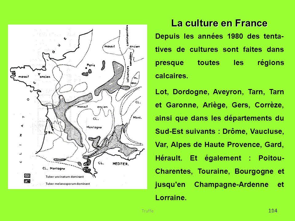 La culture en France Depuis les années 1980 des tenta- tives de cultures sont faites dans presque toutes les régions calcaires.