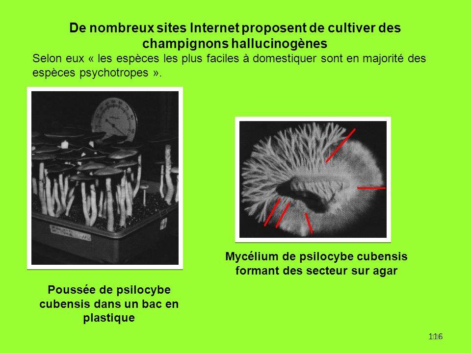 De nombreux sites Internet proposent de cultiver des champignons hallucinogènes