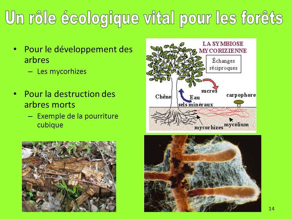 Un rôle écologique vital pour les forêts