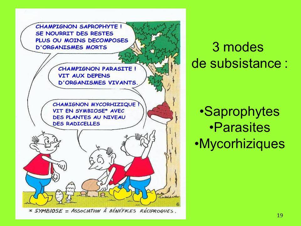 3 modes de subsistance : Saprophytes Parasites Mycorhiziques 19