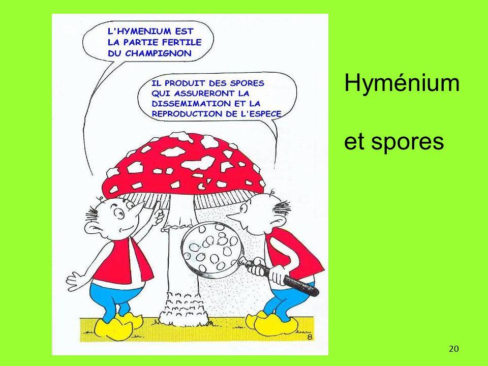 Hyménium et spores 20