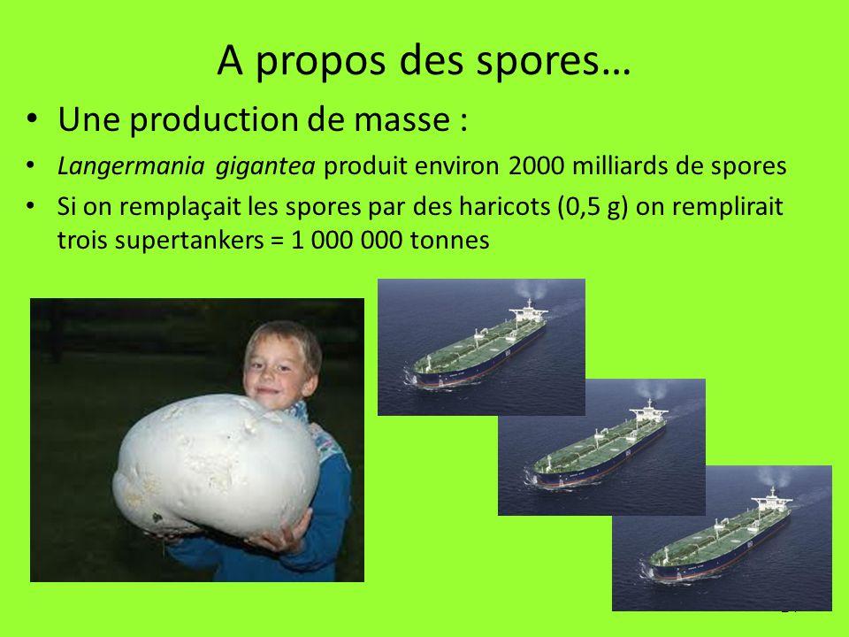 A propos des spores… Une production de masse :