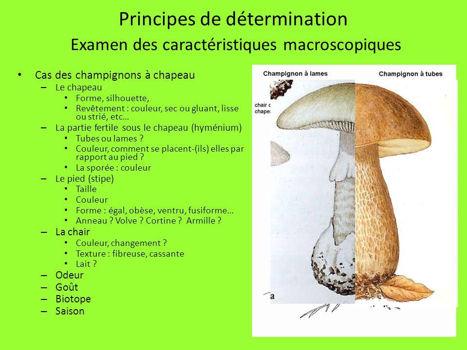Principes de détermination Examen des caractéristiques macroscopiques