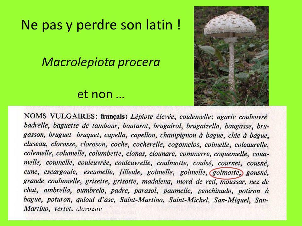 Ne pas y perdre son latin ! Macrolepiota procera et non …