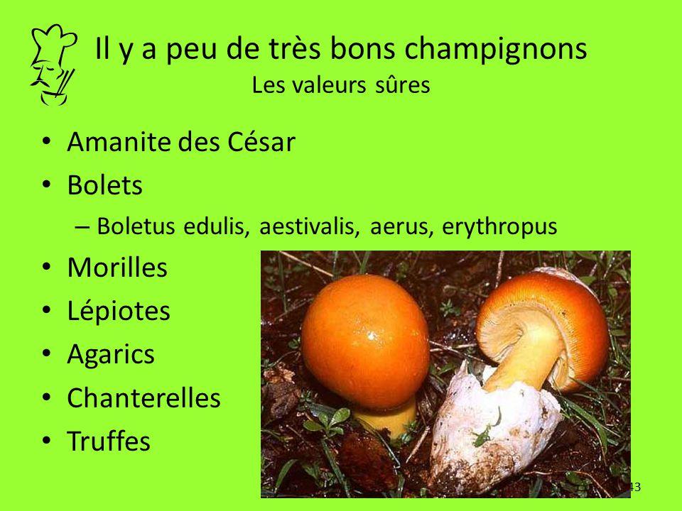 Il y a peu de très bons champignons Les valeurs sûres