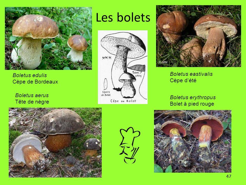 Les bolets Boletus eastivalis Boletus edulis Cèpe d'été