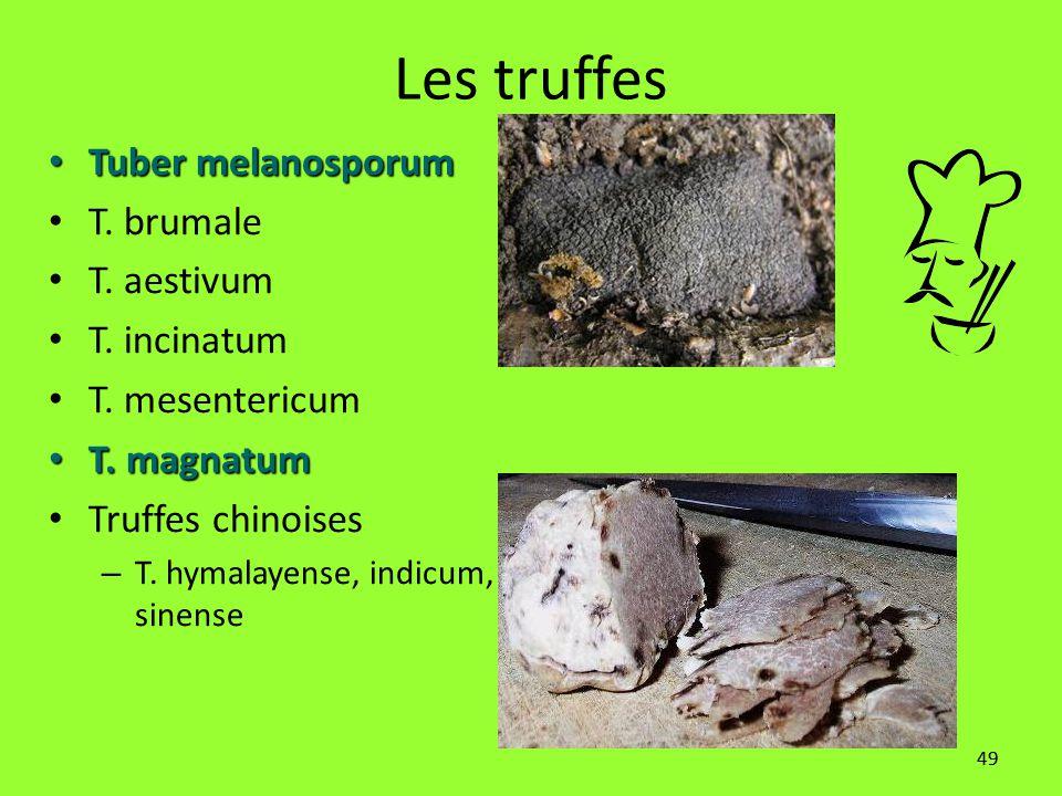 Les truffes Tuber melanosporum T. brumale T. aestivum T. incinatum