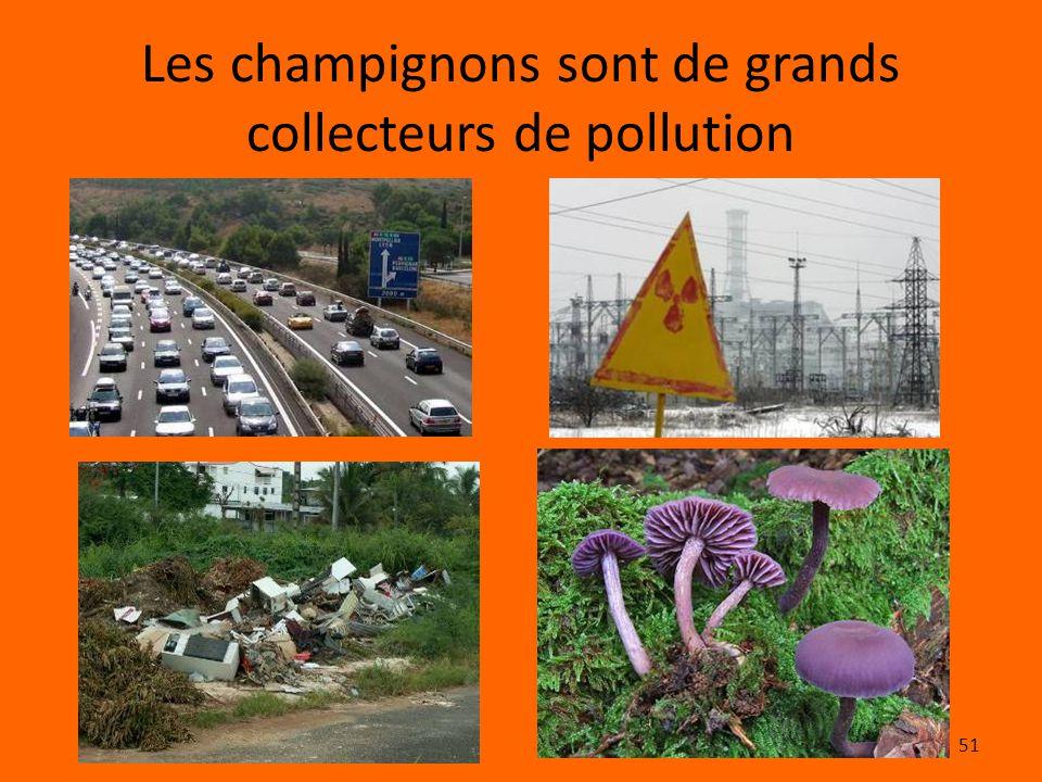 Les champignons sont de grands collecteurs de pollution