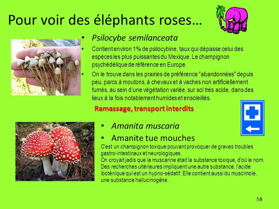 Pour voir des éléphants roses…