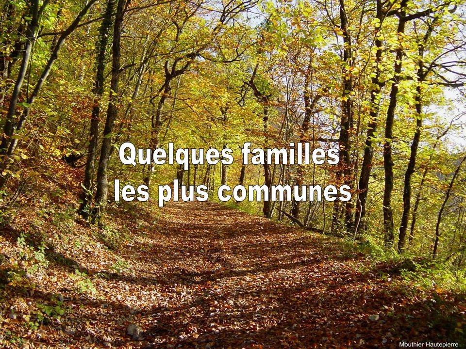 Quelques familles les plus communes 59