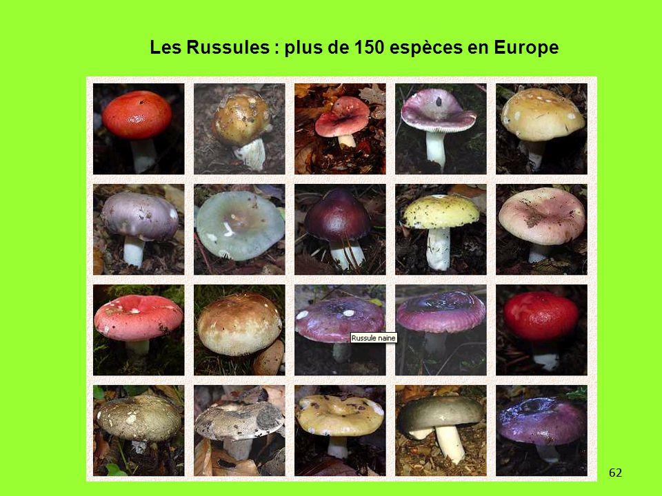 Les Russules : plus de 150 espèces en Europe
