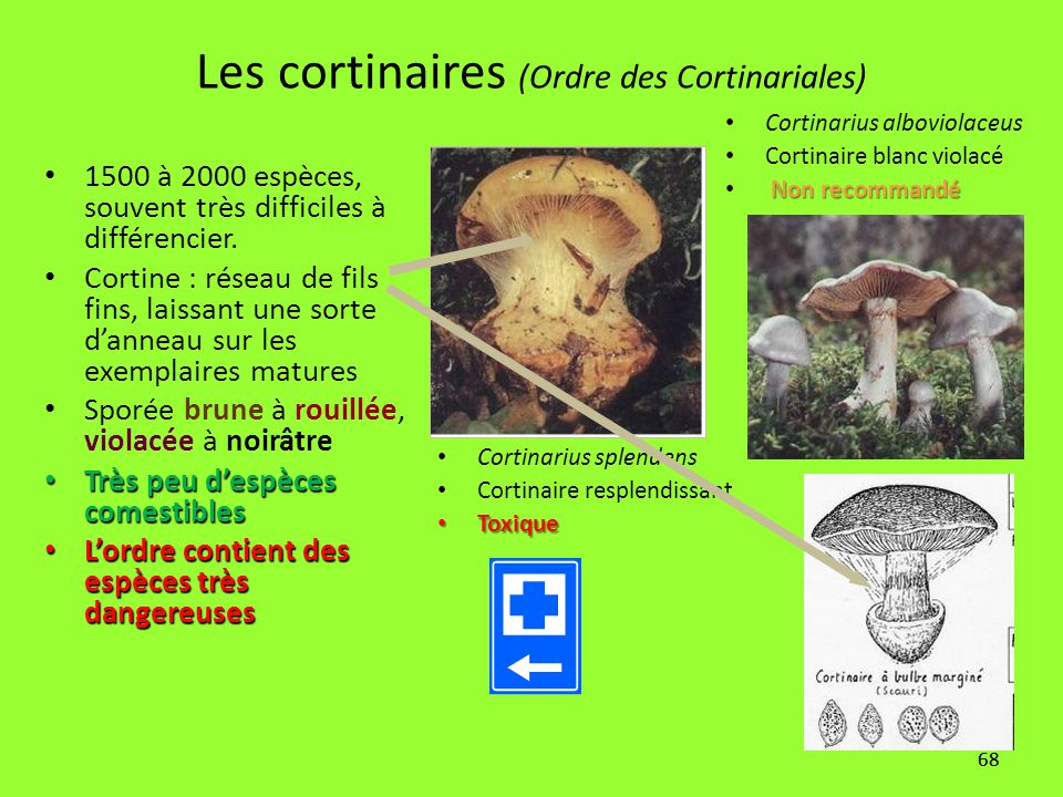 Les cortinaires (Ordre des Cortinariales)