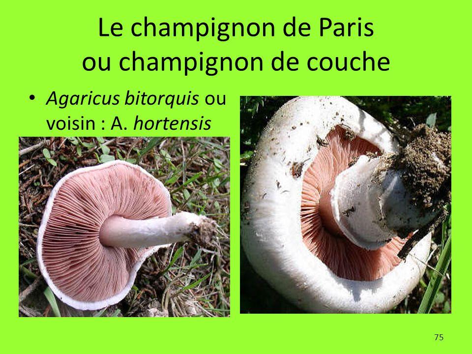 Le champignon de Paris ou champignon de couche