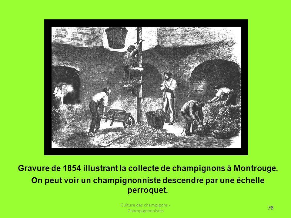 Gravure de 1854 illustrant la collecte de champignons à Montrouge.