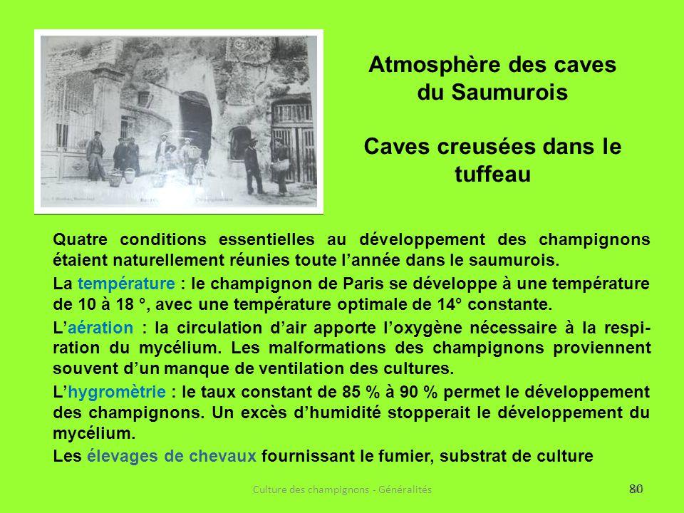 Atmosphère des caves du Saumurois Caves creusées dans le tuffeau