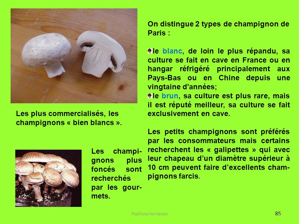On distingue 2 types de champignon de Paris :