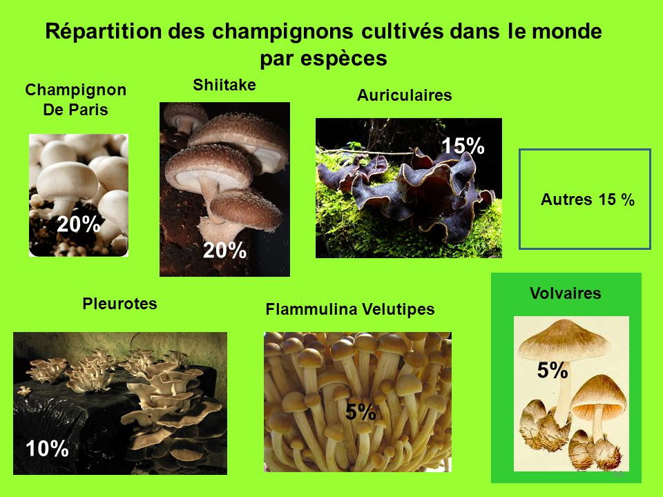 Répartition des champignons cultivés dans le monde par espèces