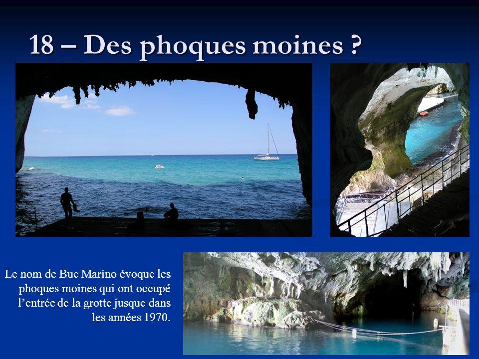 18 – Des phoques moines .