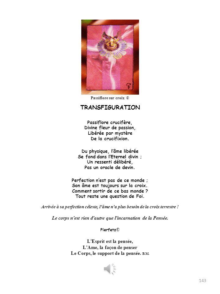 Passiflore sur croix © TRANSFIGURATION. Passiflore crucifère, Divine fleur de passion, Libérée par mystère De la crucifixion.