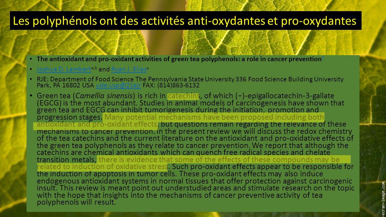Les polyphénols ont des activités anti-oxydantes et pro-oxydantes