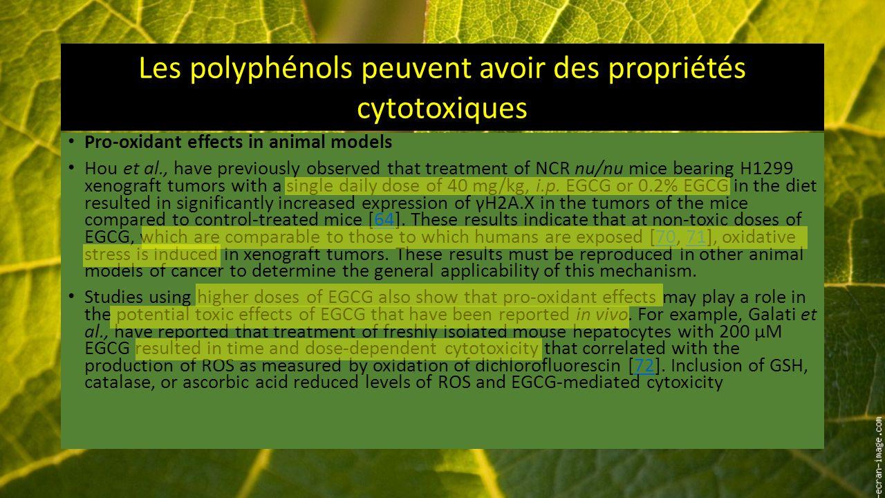 Les polyphénols peuvent avoir des propriétés cytotoxiques