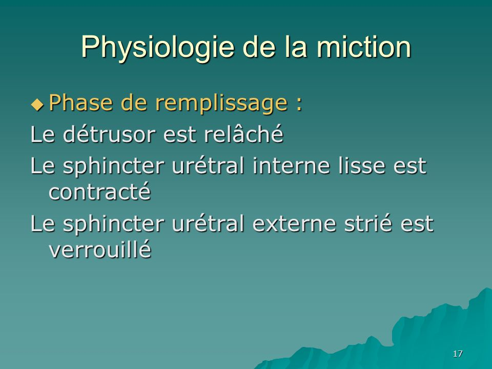 Physiologie de la miction