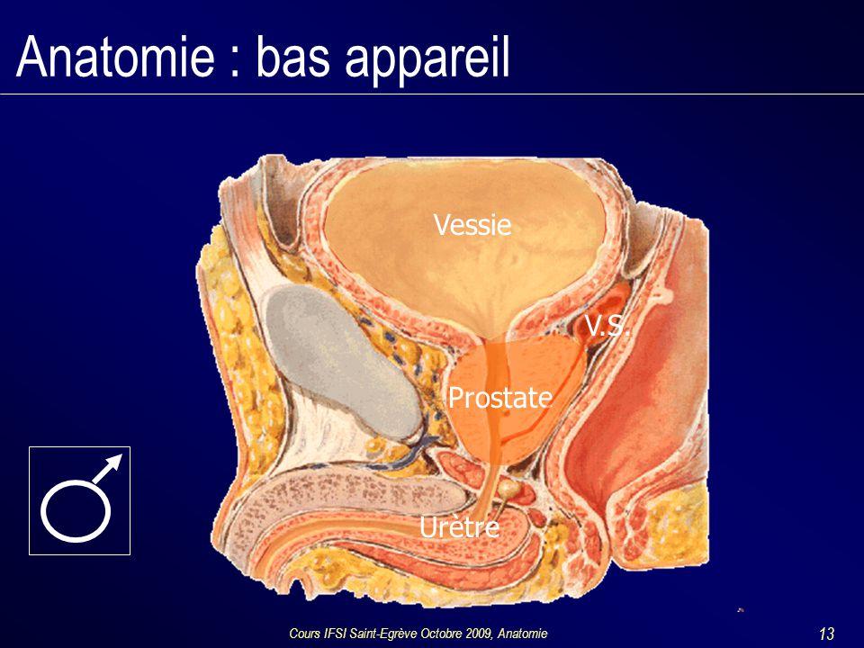 Anatomie : bas appareil