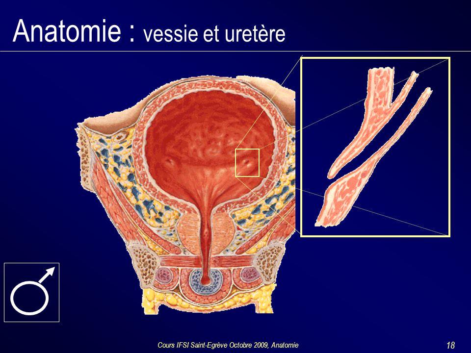 Cours IFSI Saint-Egrève Octobre 2009, Anatomie