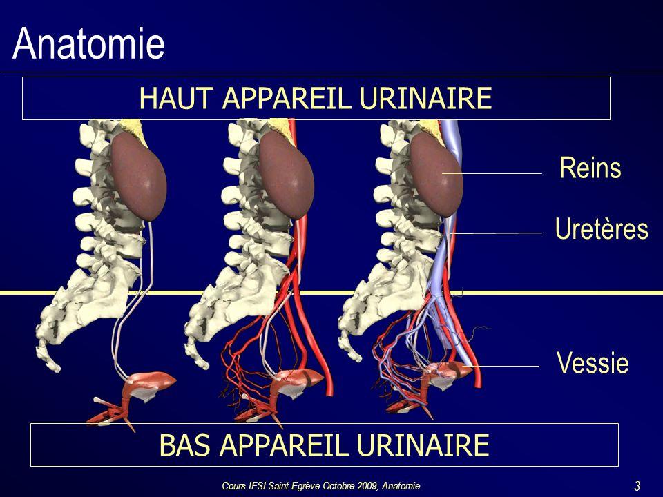 Anatomie HAUT APPAREIL URINAIRE Reins Uretères Vessie