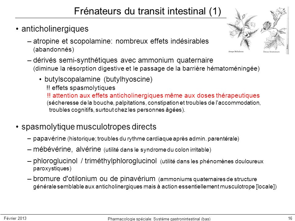 Frénateurs du transit intestinal (1)