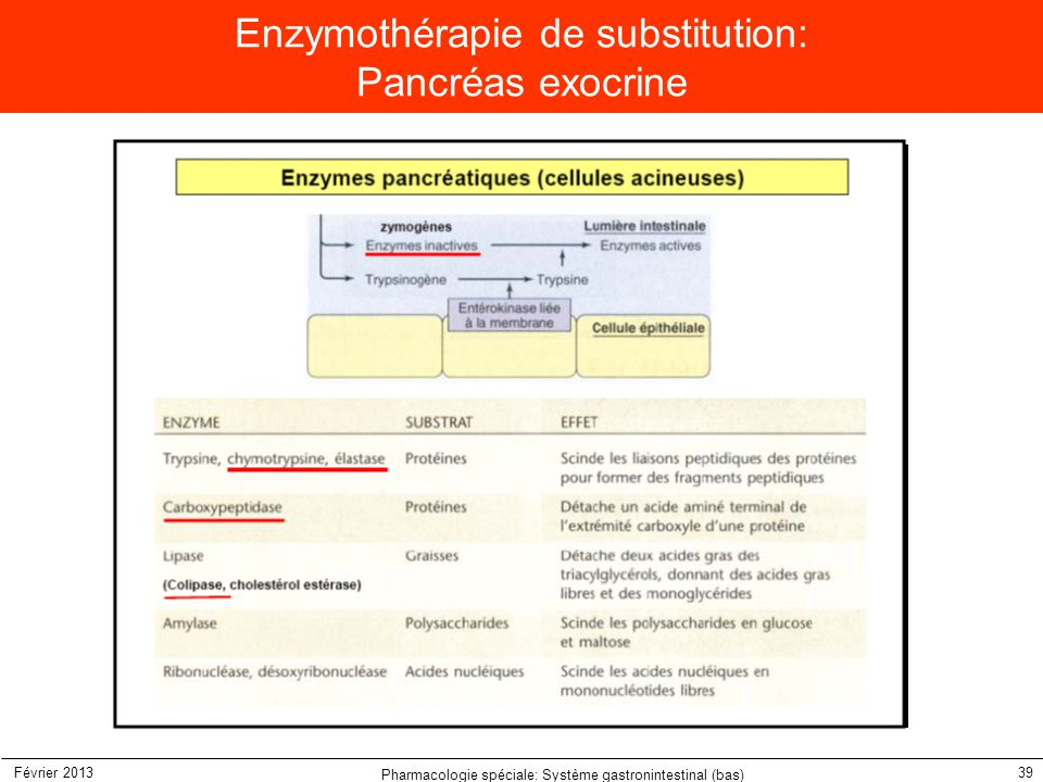 Enzymothérapie de substitution: Pancréas exocrine