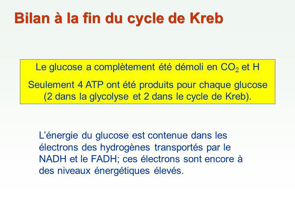 Le glucose a complètement été démoli en CO2 et H
