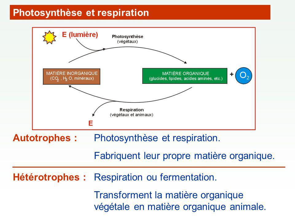 Photosynthèse et respiration