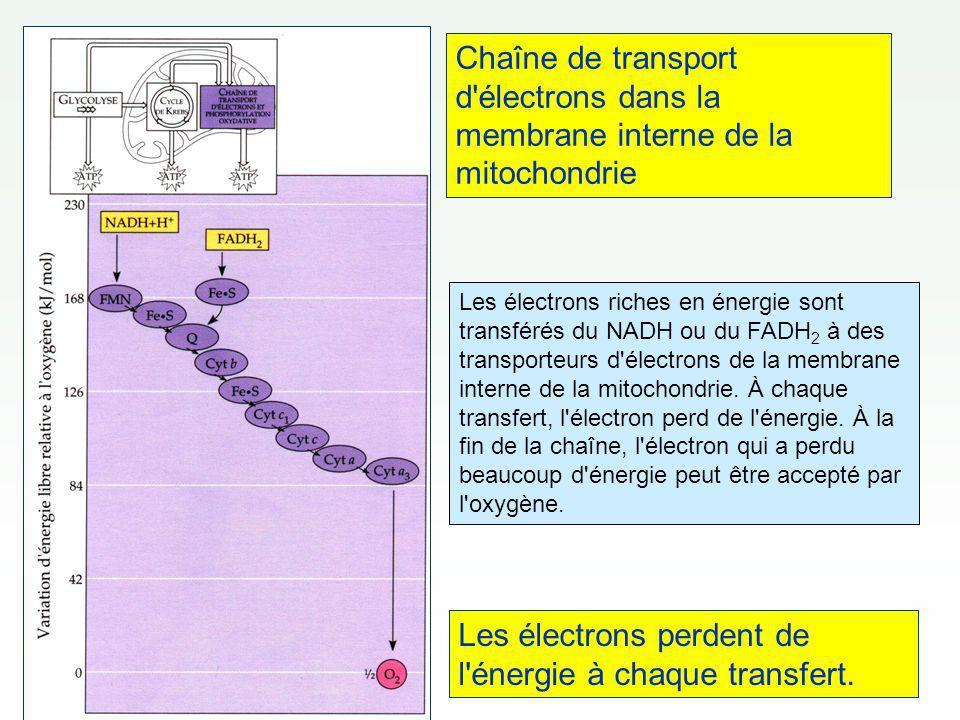 Les électrons perdent de l énergie à chaque transfert.