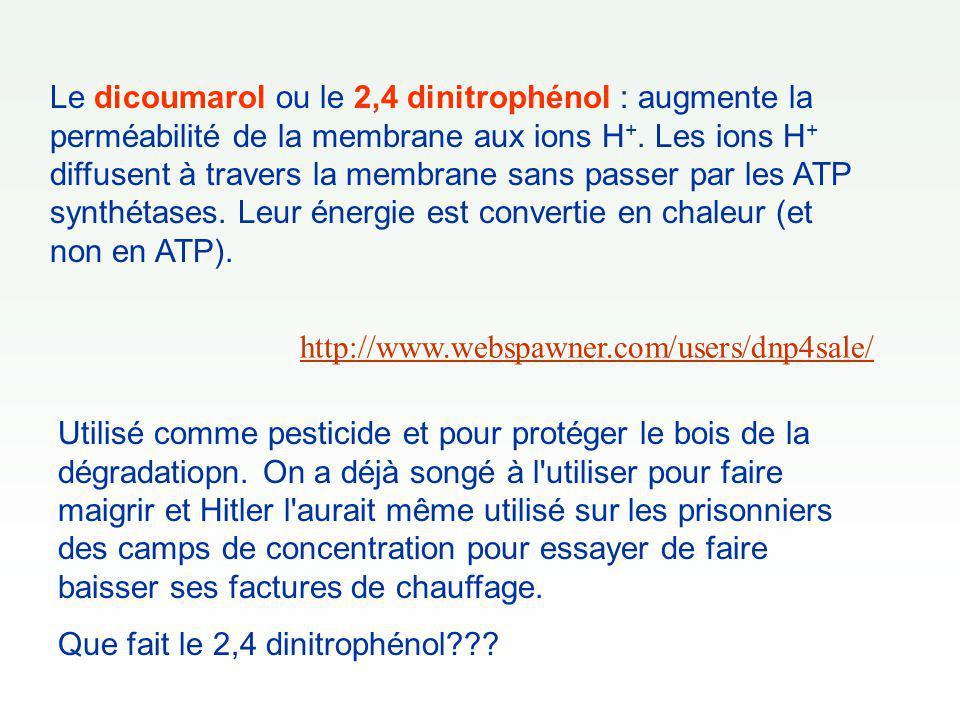 Le dicoumarol ou le 2,4 dinitrophénol : augmente la perméabilité de la membrane aux ions H+. Les ions H+ diffusent à travers la membrane sans passer par les ATP synthétases. Leur énergie est convertie en chaleur (et non en ATP).