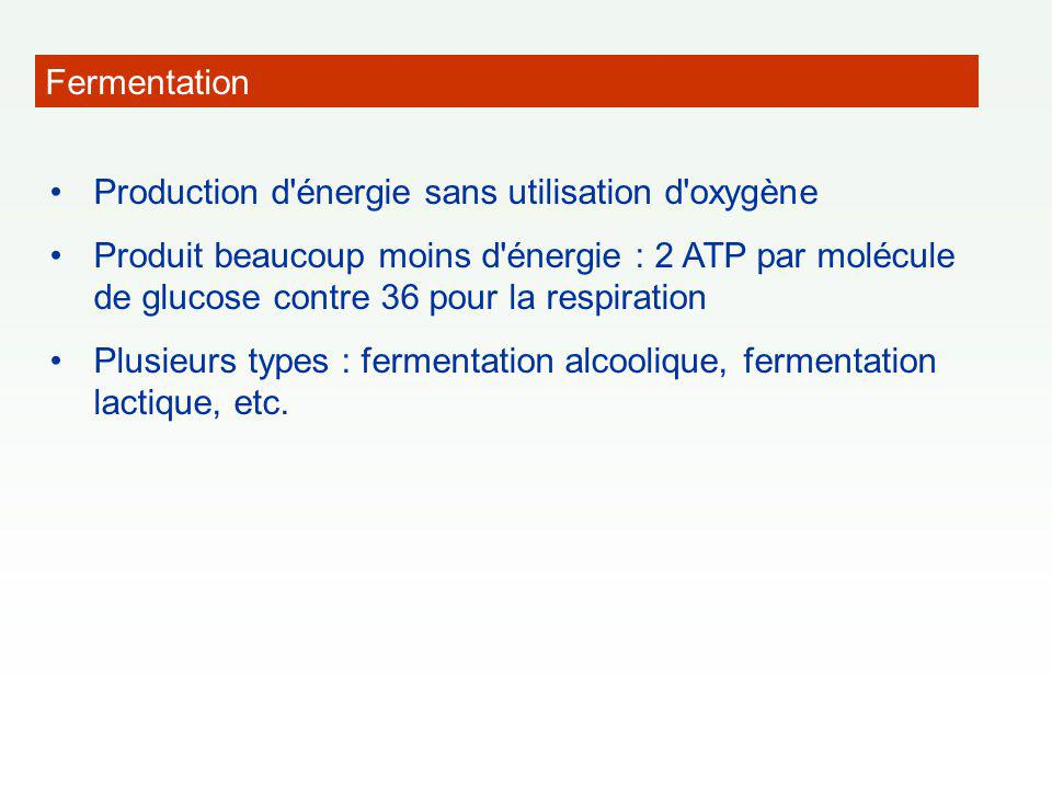 Fermentation Production d énergie sans utilisation d oxygène.