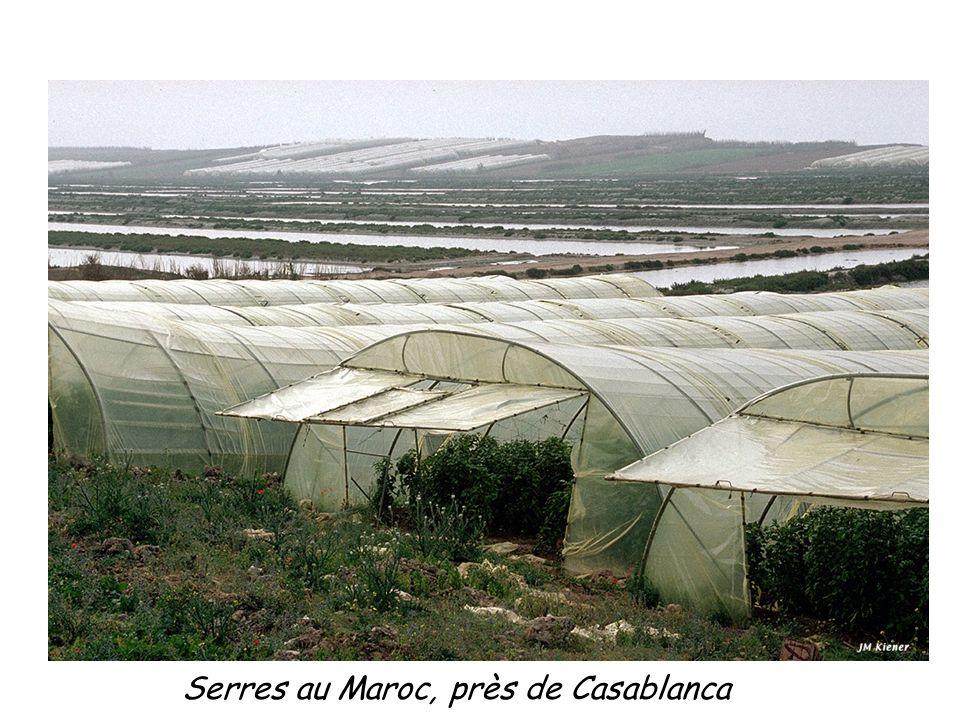 Serres au Maroc, près de Casablanca